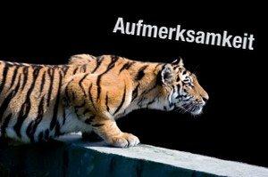 """Tiger mit dem Schriftzug """"Aufmerksamkeit"""""""